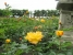 Im Rosengarten (1)