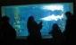 Zella-Mahlis Aquarium